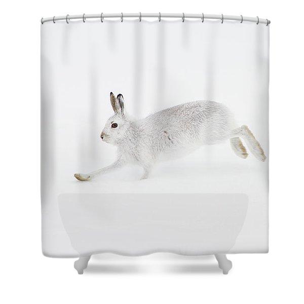 Mountain Hare Running Shower Curtain