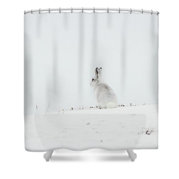 Mountain Hare Sat In Snow Shower Curtain