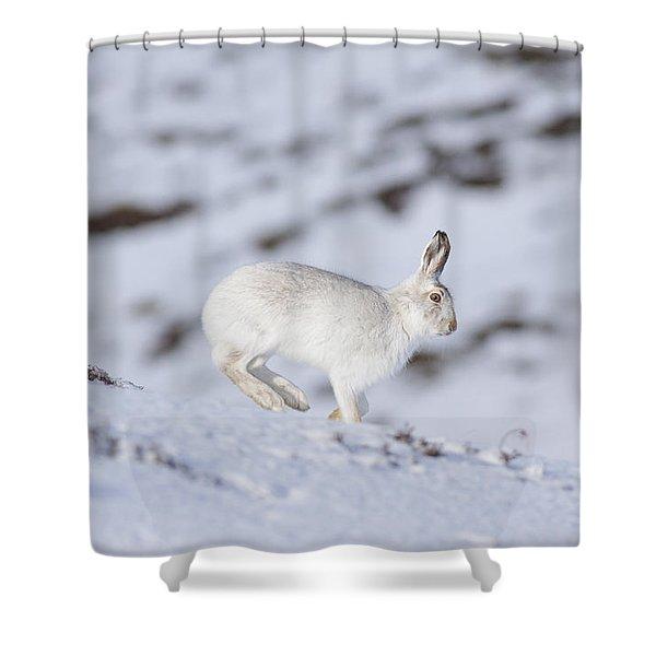 Mountain Hare - Scottish Highlands  #12 Shower Curtain