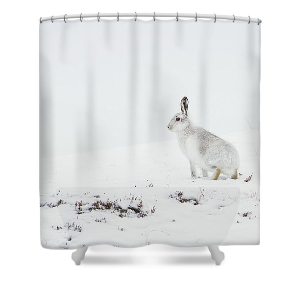 Mountain Hare Side On Shower Curtain