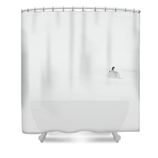 Mountain Hare Small In Frame Right Shower Curtain