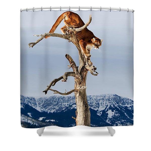 Mountain Lion In Tree Shower Curtain