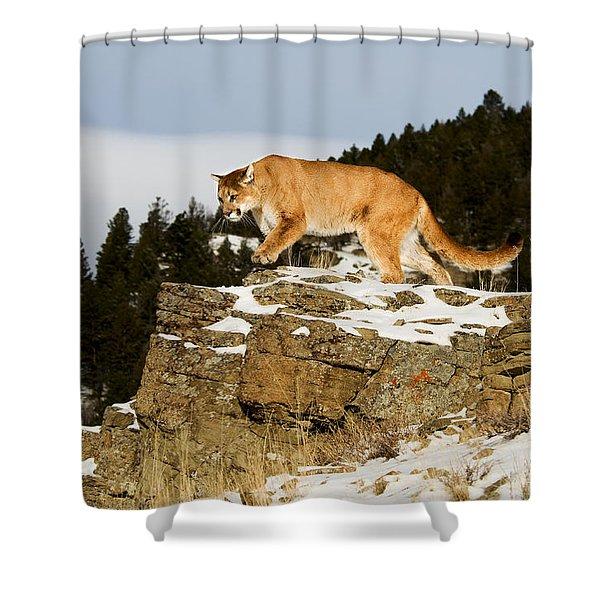 Mountain Lion On Rocks Shower Curtain