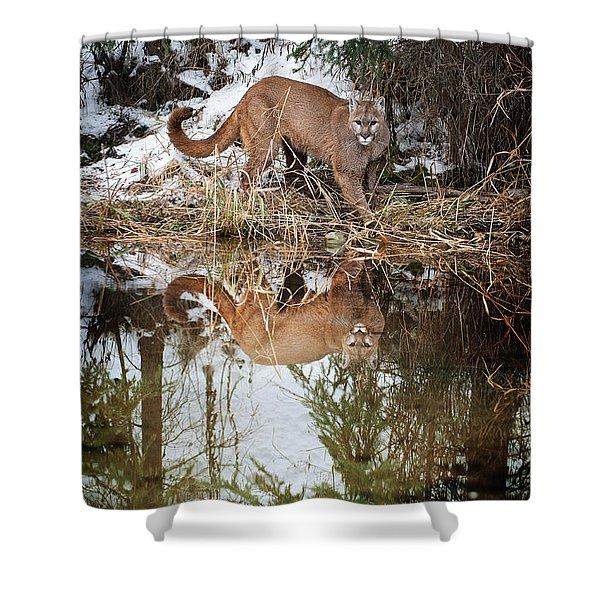 Mountain Lion Reflection Shower Curtain