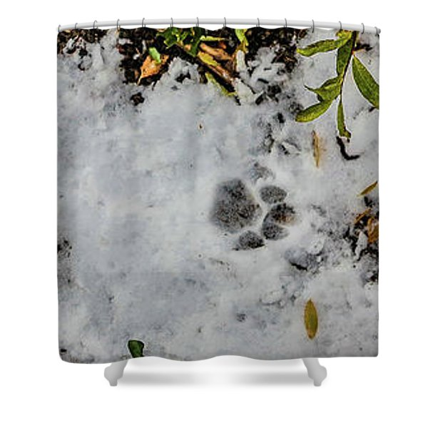 Mountain Lion Tracks In Snow Shower Curtain