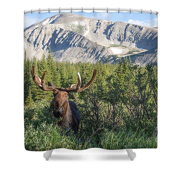 Mountain Moose Shower Curtain