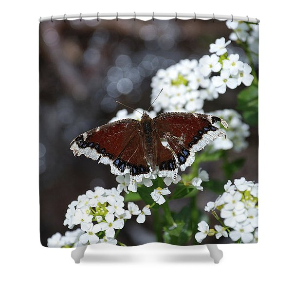 Shower Curtain featuring the photograph Mourning Cloak by Jason Coward