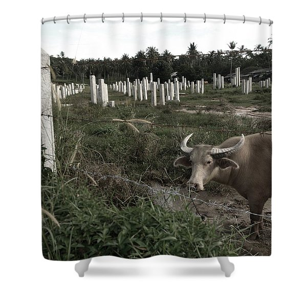 Mourning In The Palm-tree Graveyard Shower Curtain