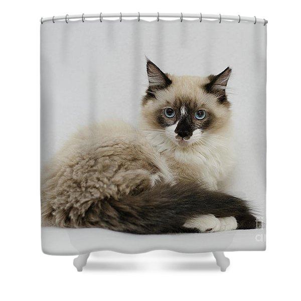 Mr. Atkin Shower Curtain