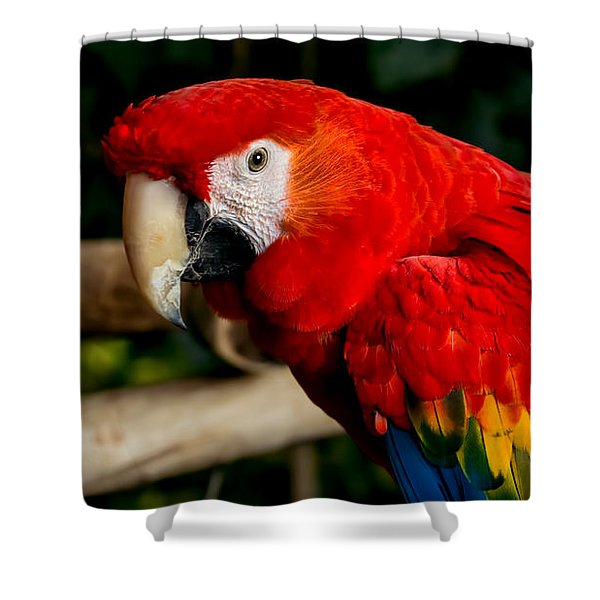 Mr Colorful  Shower Curtain