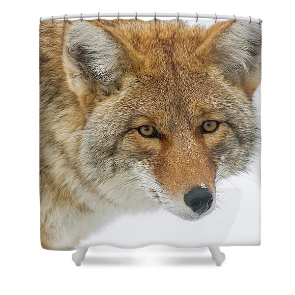 Mr. Coyote Shower Curtain
