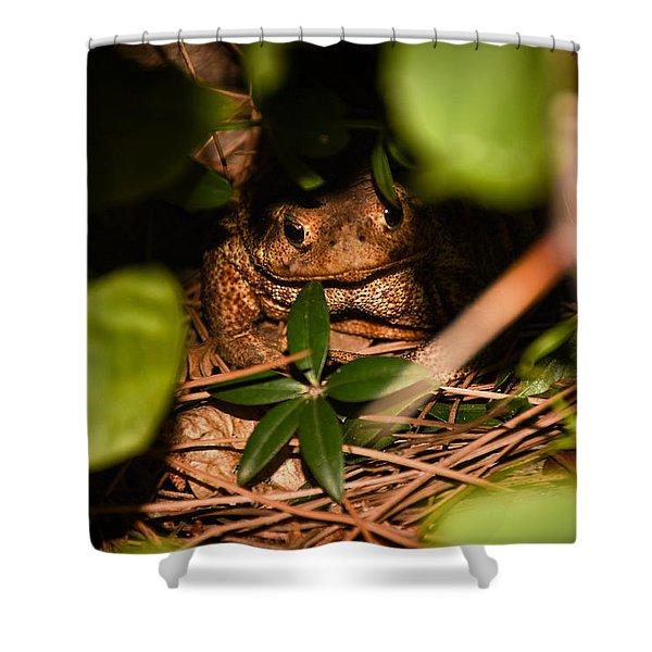 Mr Frog Shower Curtain