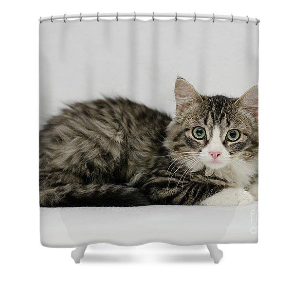 Ms. Alexia Shower Curtain