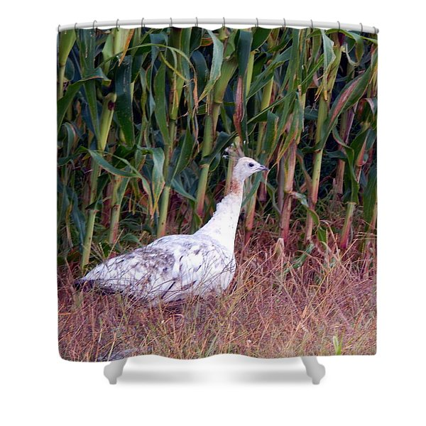 Ms Giddygaddy Takes A Stroll Shower Curtain