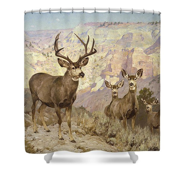 Mule Deer In The Badlands, Dawson County, Montana Shower Curtain