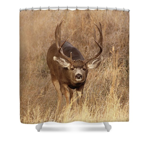 Muledeerbuck1 Shower Curtain