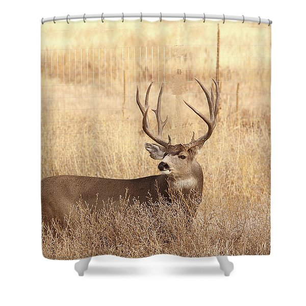 Muledeerbuck2 Shower Curtain