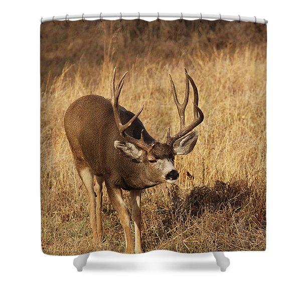 Muledeerbuck9 Shower Curtain