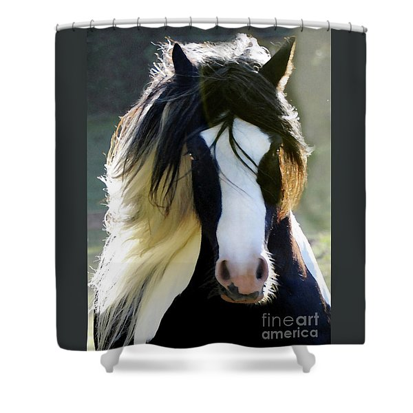 Shower Curtain featuring the photograph Murphy by Melinda Hughes-Berland