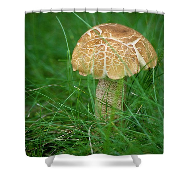 Mushroom In The Grass Shower Curtain