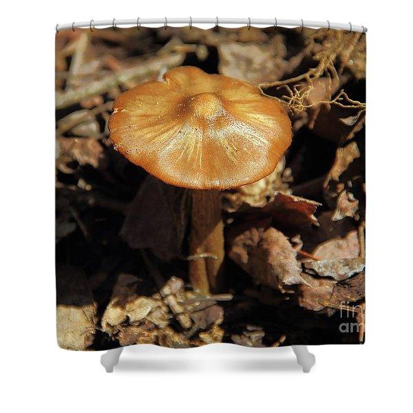 Mushroom Rising Shower Curtain