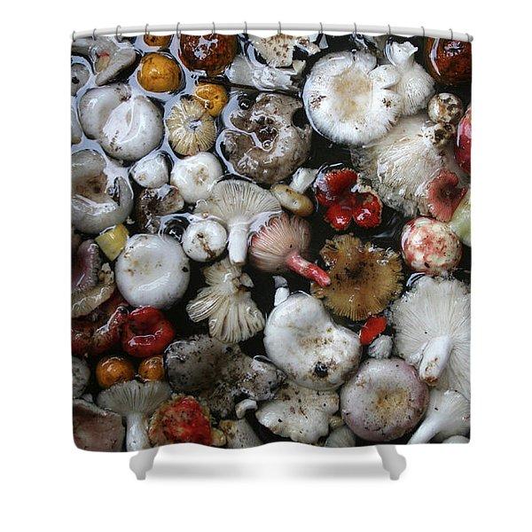 Mushrooms In Thailand Shower Curtain