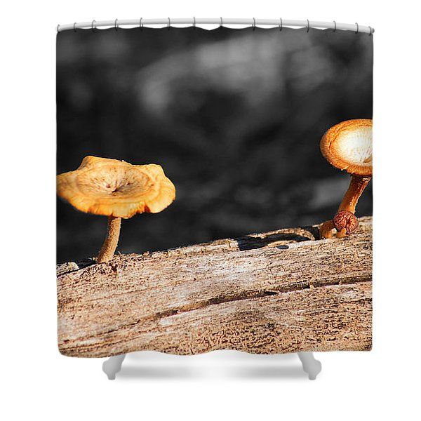 Mushrooms On A Branch Shower Curtain