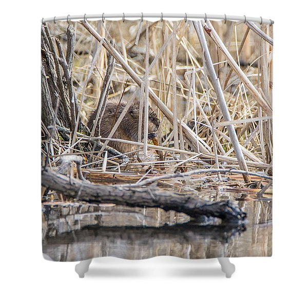 Muskrat Eating A Fish Shower Curtain