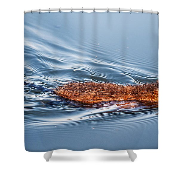 Muskrat Speed Swiming Shower Curtain
