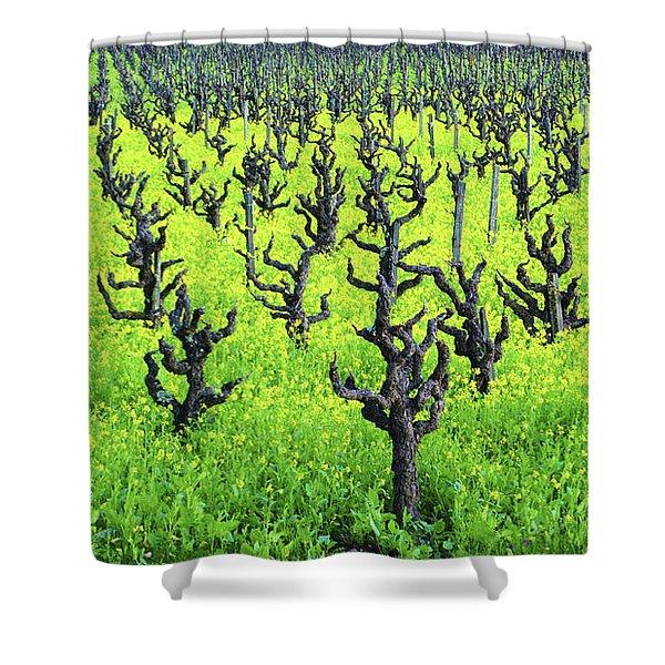 Mustard Flowers In The Vineyards Shower Curtain