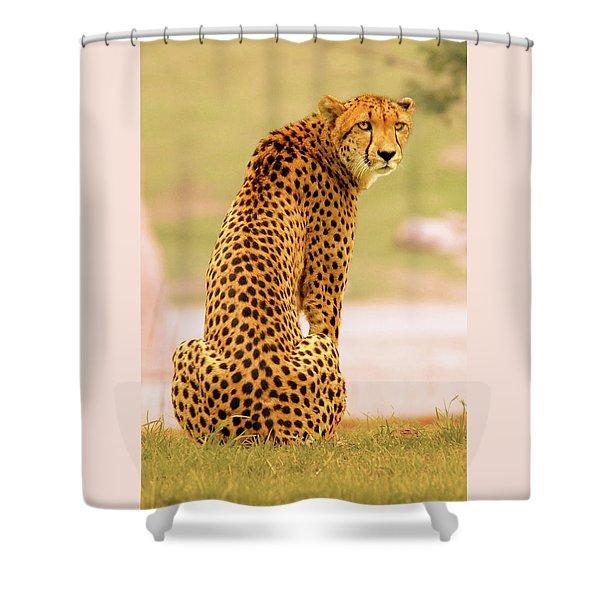 My Cheetah Shower Curtain