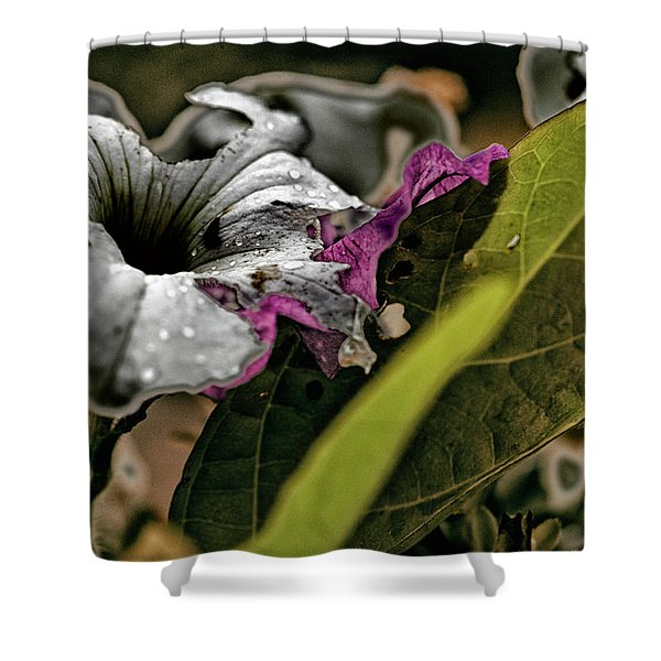 My How Your Beauti Is Evolving Shower Curtain