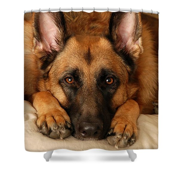 My Loyal Friend Shower Curtain