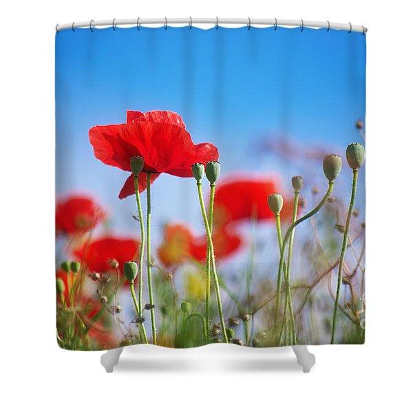 My Summertime Shower Curtain
