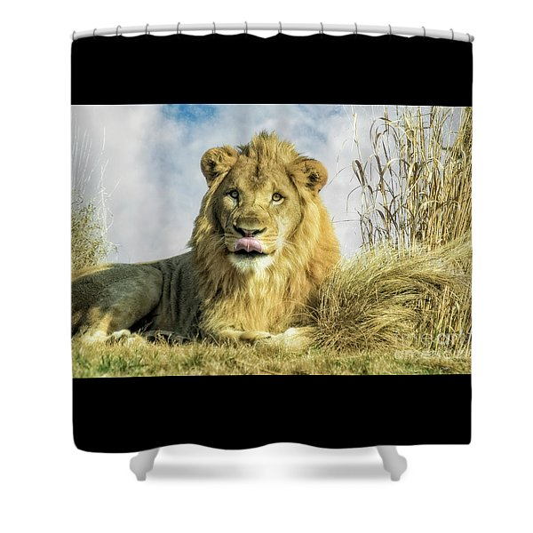 My You Look Tasty Shower Curtain
