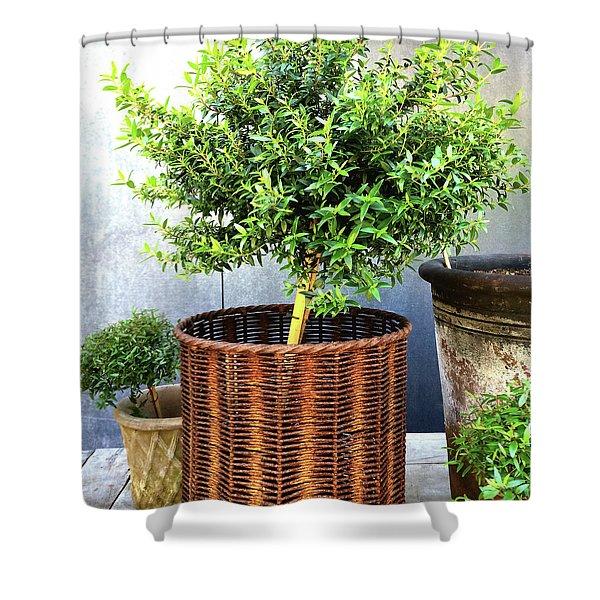 Myrtle Tree In A Rusty Basket Shower Curtain