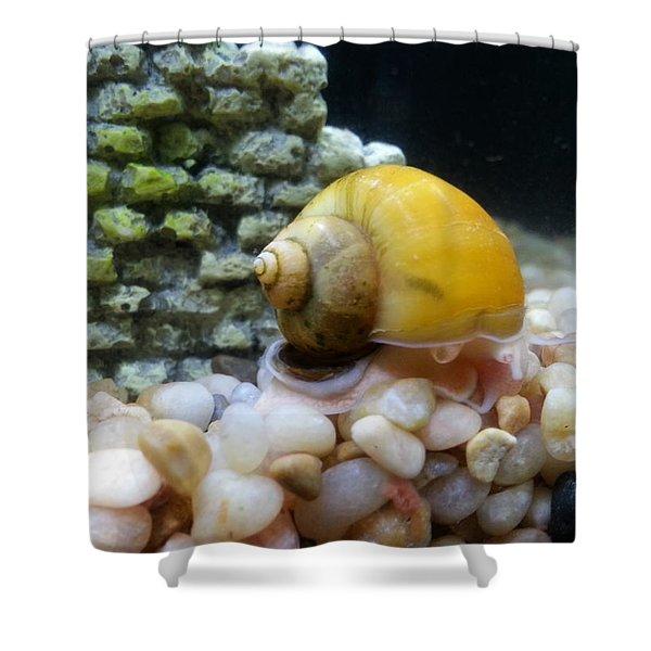 Mystery Snail Shower Curtain