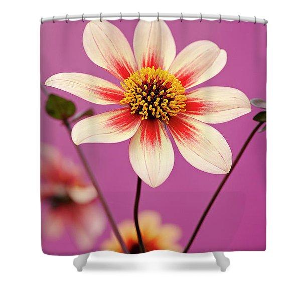 Mystic Dahlia Shower Curtain