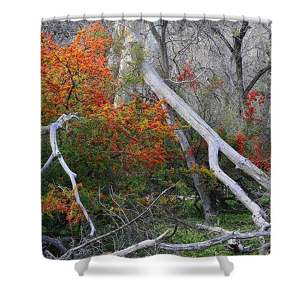Mystical Woodland Shower Curtain