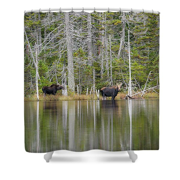 Shower Curtain featuring the photograph  Nancy Pond - White Mountains New Hampshire Usa by Erin Paul Donovan