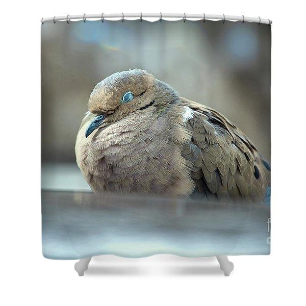 Nap Shower Curtain