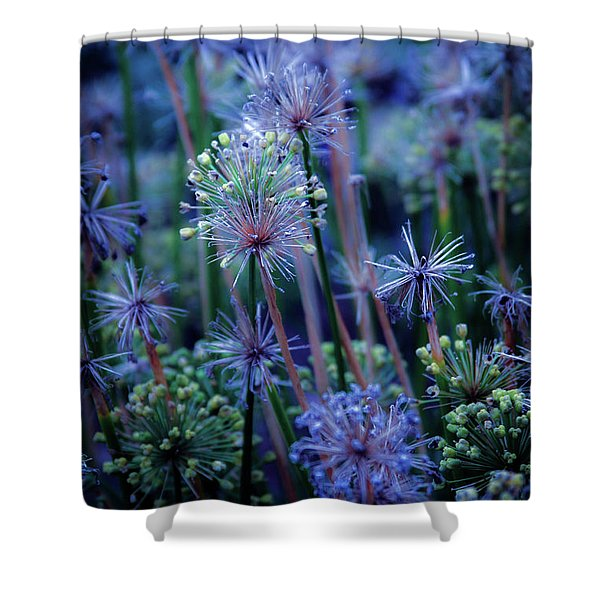 Natural Fireworks 4791 H_2 Shower Curtain