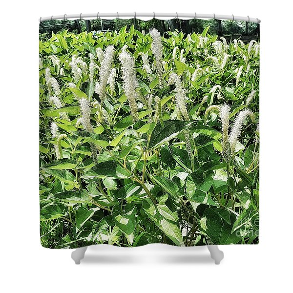 Natural Vision Shower Curtain
