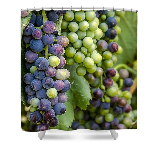 Natures Colors In Wine Grapes Shower Curtain