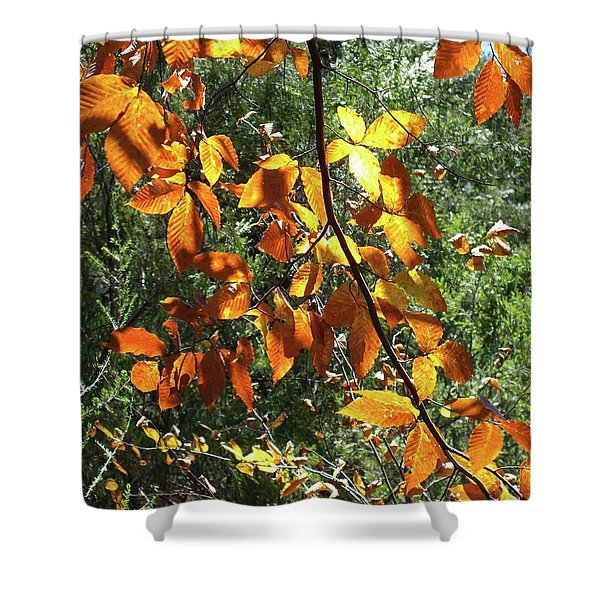 Nature's Finest 2 - Ricketts Glen Shower Curtain