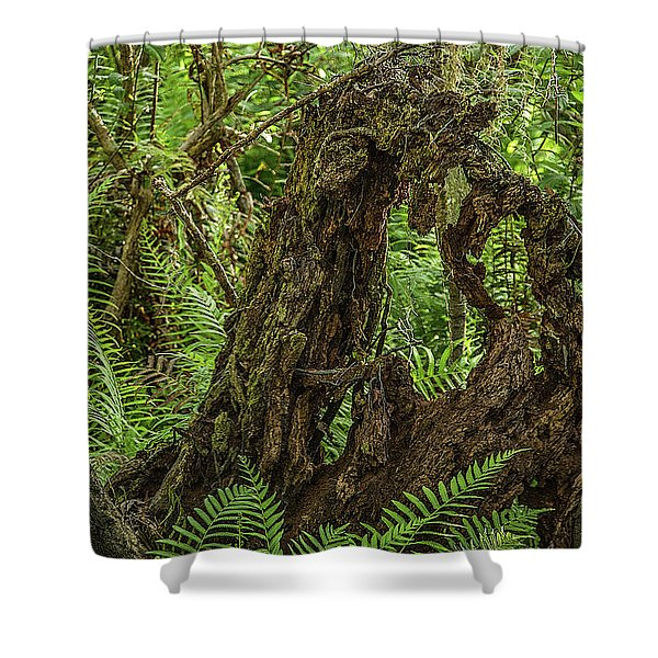 Nature's Sculpture Shower Curtain