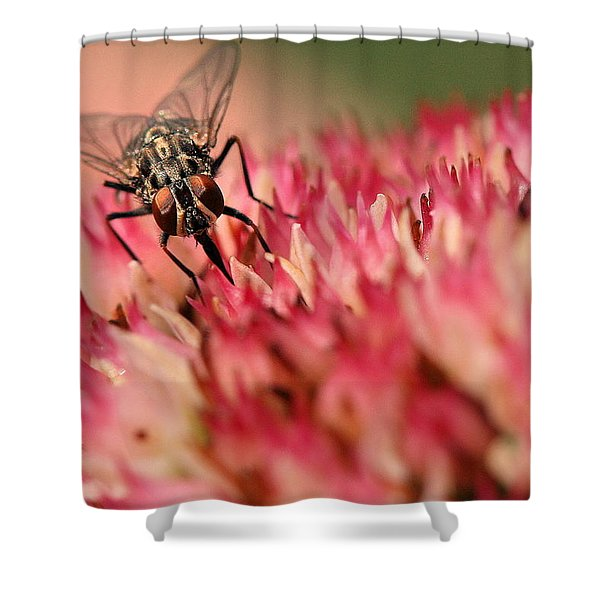Nectar Hunt Shower Curtain
