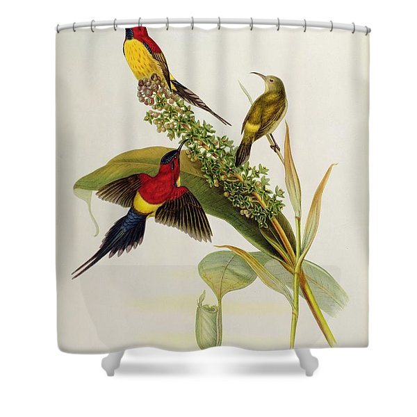 Nectarinia Gouldae Shower Curtain