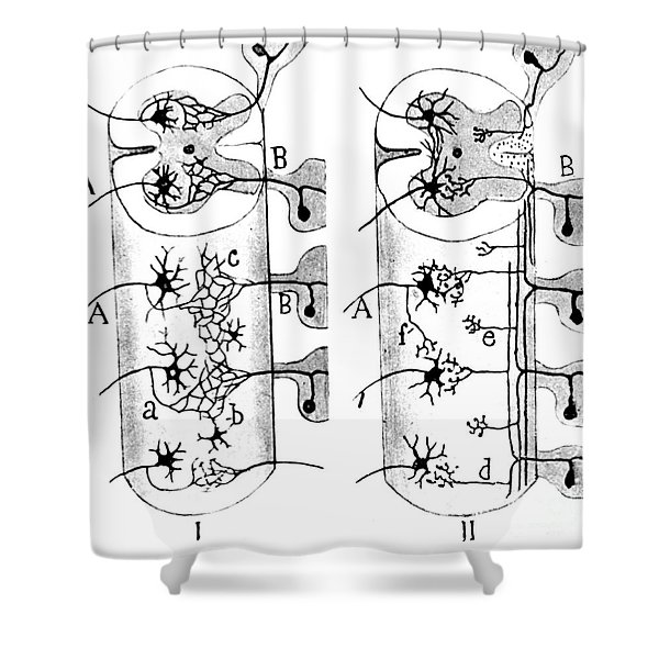 Neuroglia Cells Illustrated By Cajal Shower Curtain