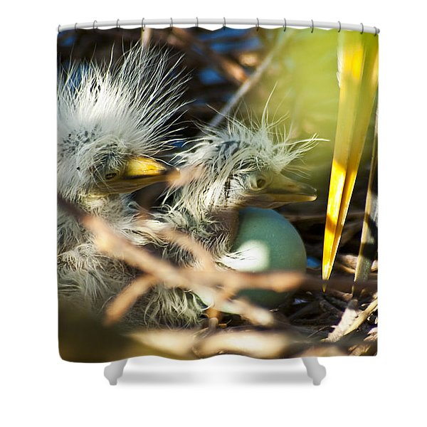 New Arrivals Shower Curtain